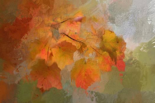 Fall foliage leaves maple Free Photo