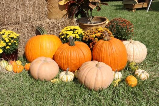 Fall gourds halloween pumpkins #73190