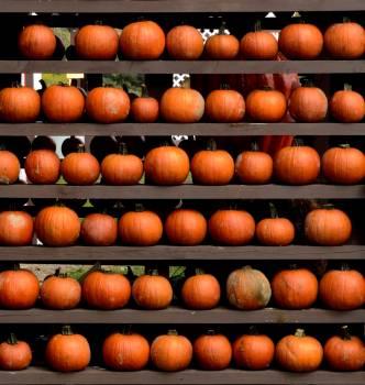 Fall harvest market october #73240