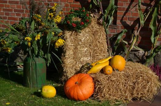 Autumn autumn decoration pumpkin thanksgiving #73271