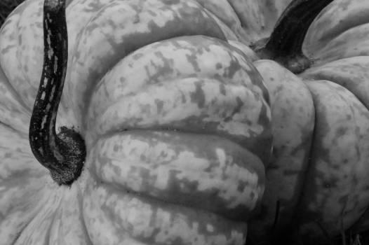Autumn background black and white close Free Photo