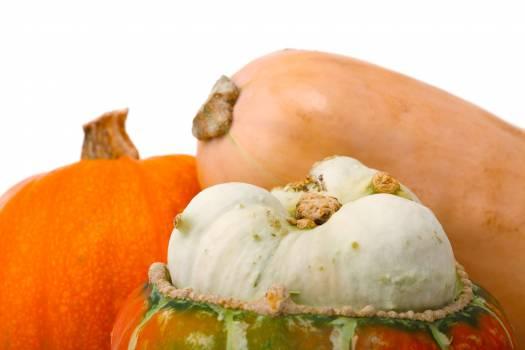 Agriculture autumn butternut squash crop Free Photo
