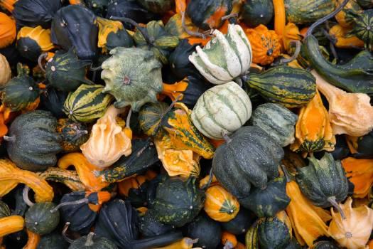 Autumn autumn decoration collection colorful #73363