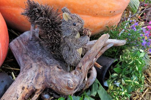 Plant pumpkin root squirrel Free Photo