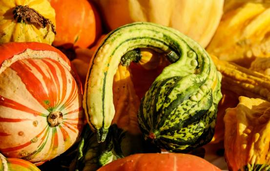 Agriculture autumn colorful gourd #73407