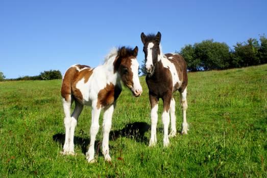Animal baby brown colt Free Photo