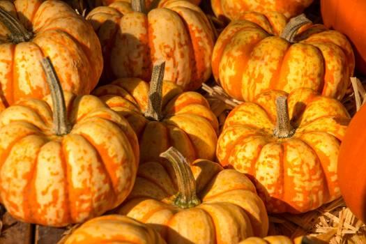 Autumn farmer s market halloween harvest festival Free Photo
