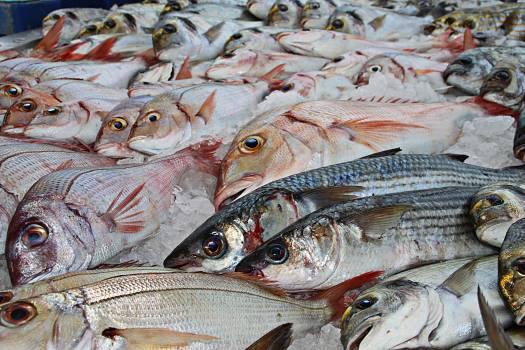 Docks fish fish fillets fish market #74088