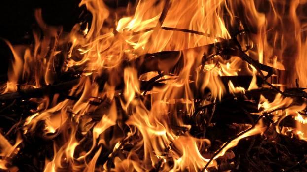 Bonfire burning wood fire campfire fire Free Photo