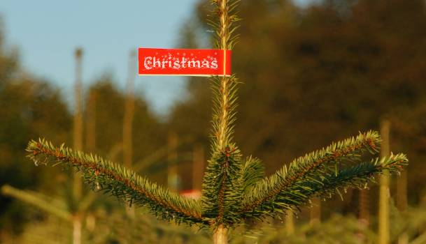 Advent buy christmas christmas eve Free Photo