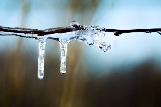 Cold frozen ice icicle Free Photo