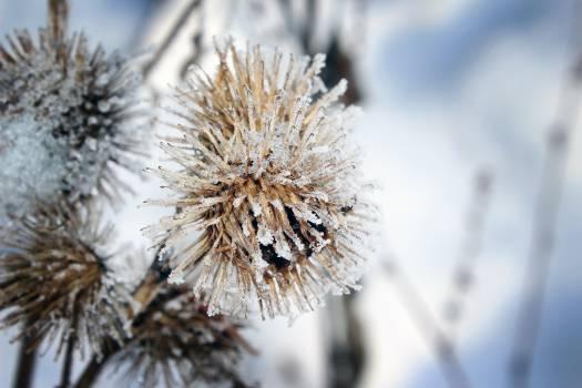 Close up flora flower frost #74839