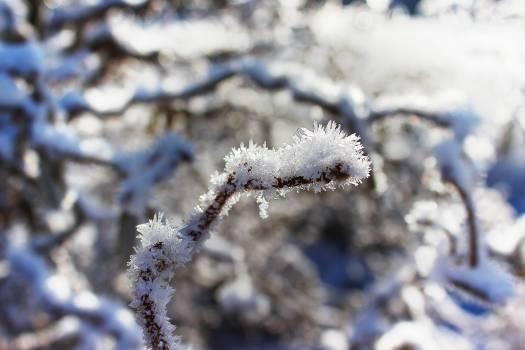 Eiskristalle frozen glitter ice Free Photo