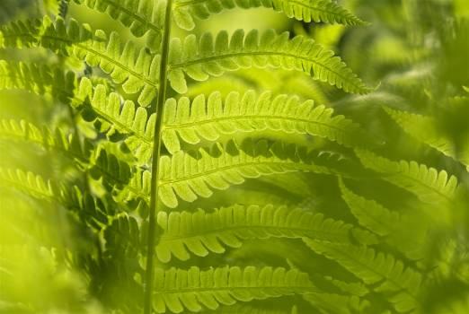 Back lit botanical fern green Free Photo