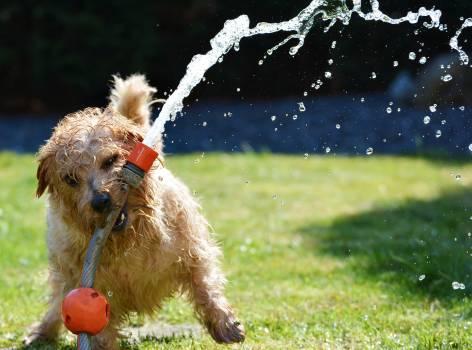 Animal blow up lawn cute dog #74988