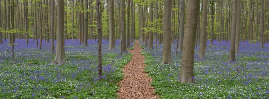 Beautiful calm colors countryside Free Photo