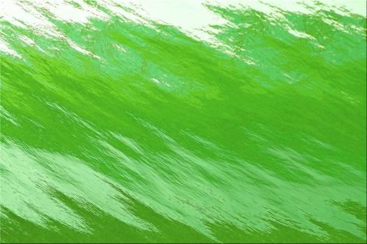 Green Leaf Plant Free Photo