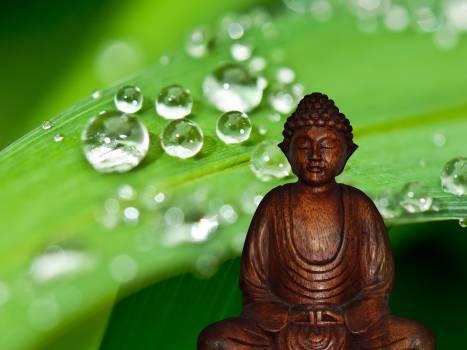 Asia buddha buddhism buddhist Free Photo