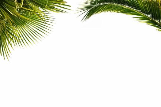 Foliage palm paper plant #76186