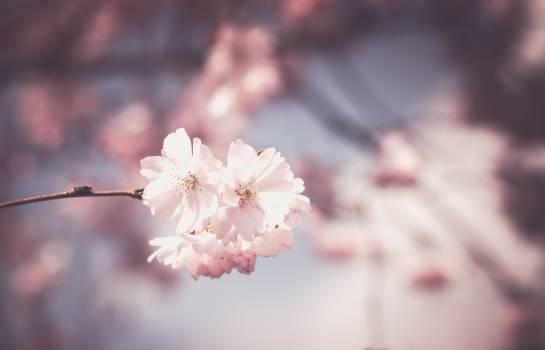 Bloom blossom botanical botany #76326