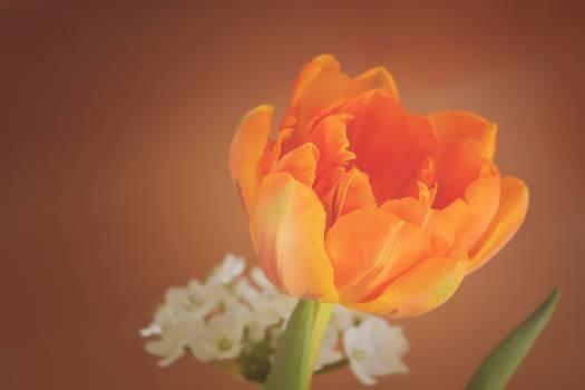 Bloom blossom close flower #76332