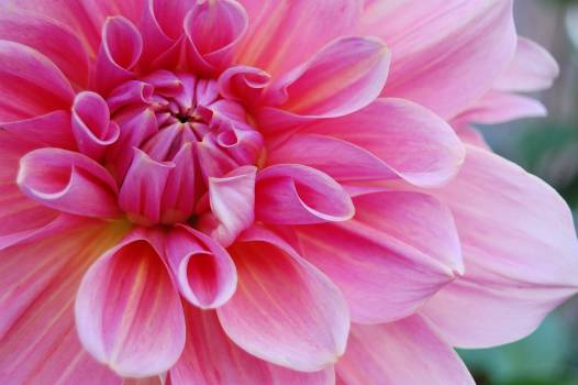 Bloom blossom circular close #76334