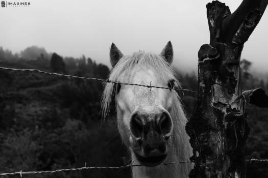 Black white horses colombia sony medellin tr Free Photo