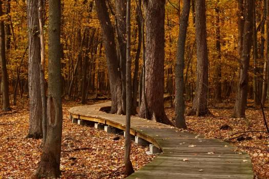 Autumn autumn landscape autumn leaf autumn leaves #76375