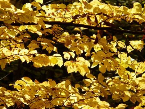 Autumn autumn forest back light beech #76377