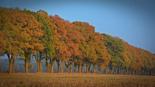 Autumn autumn tree avenue fall color #76443