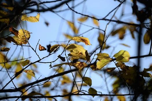 Aesthetic autumn leaves sky #76448