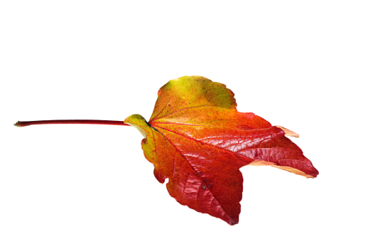 Autumn colorful fall color golden autumn #76487