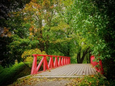 Bridge fall trees wood #76492