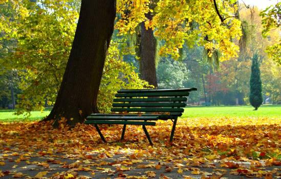 Autumn autumn gold beauty bench #76497