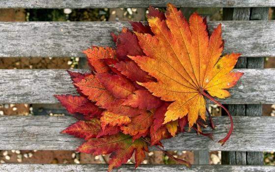 Autumn autumn leaves autumnal brown #76511