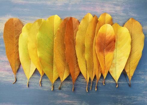 Autumn fall leaf leaves #76514