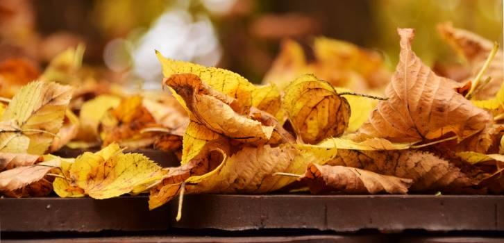 Autumn beautiful dry fall foliage Free Photo