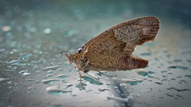 Animal butterfly close insect Free Photo
