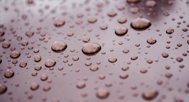 Dew raindrops surface water Free Photo