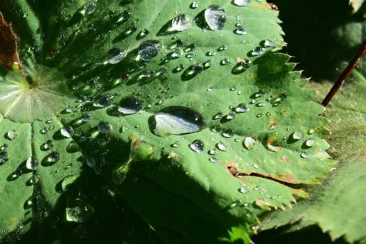 Drop of water green leaf leaves #76623