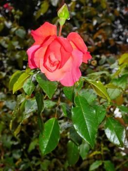 Bloom blossom close filigree Free Photo