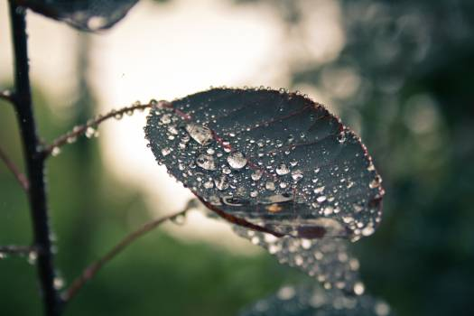 Blur close up dew dewdrops #76728