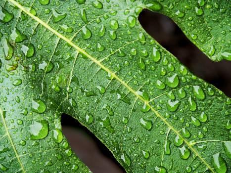 Dew drip drop droplets Free Photo