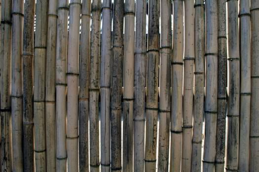 Bamboo bamboo wall fence wall Free Photo