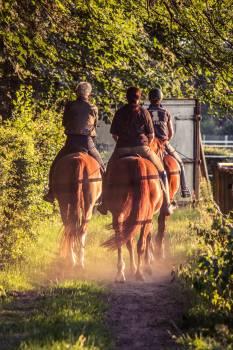 Equestrian evening light horses reiter Free Photo