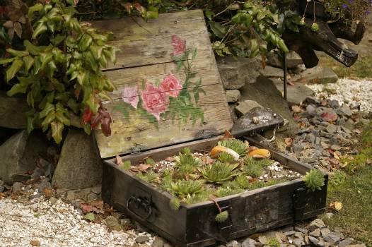Arrangement garden garden plants plants Free Photo