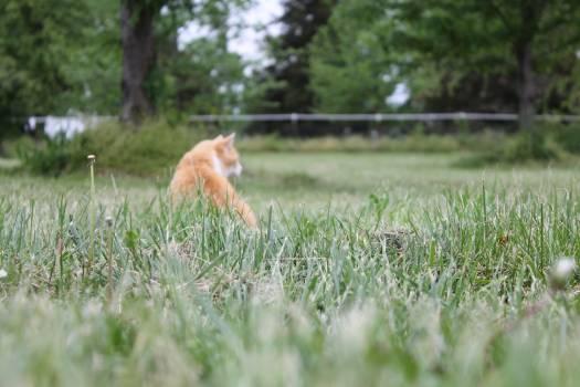 Animal animals cat excited #77452