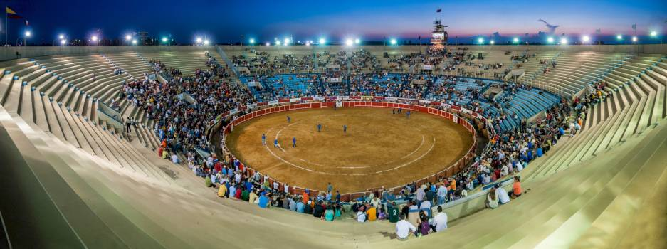 Animals bull bull ring competition #77836