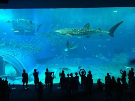 Aquarium crowd people shark #77909