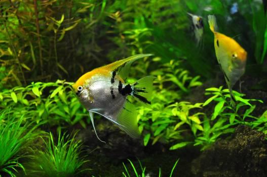 Animal aqua aquarium aquatic Free Photo